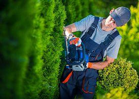 ein Gärtner mit Heckenschere