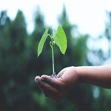 Pflanzenspross