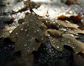Blätter die Trauer ausdrücken