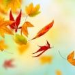 Herbstblätter fallen