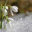 Knospen im Schnee
