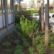 der neue Garten am Gemeindehaus